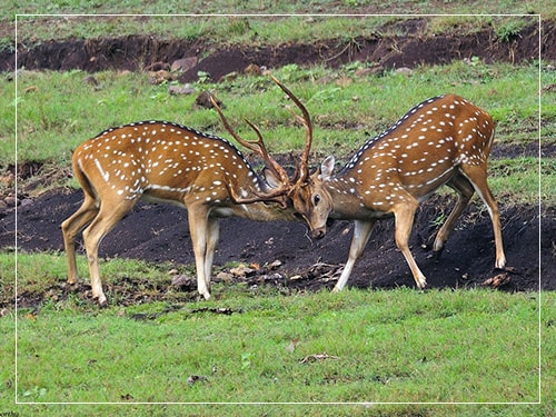 bhadra_wildlife_sanctuary